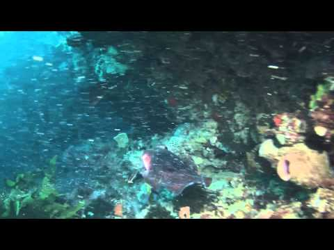 Billy's Basin Dive