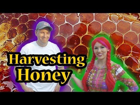 Beekeeping Basics PT 2: Harvesting Honey & Meet the Queen Bee