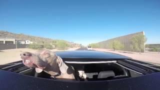 فيديو طريف لكلب يستمتع بالهواء من فتحة سقف السيارة
