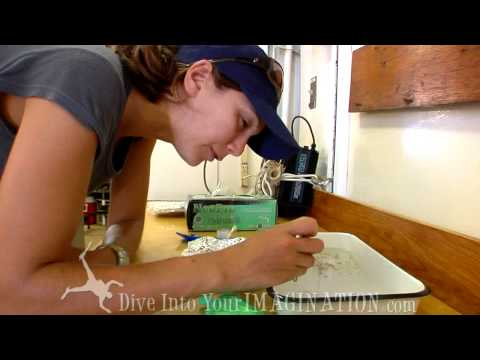Project Kaisei - Chelsea Rochman studies Salps with SEAPLEX - The Garbage Patch - Scripps