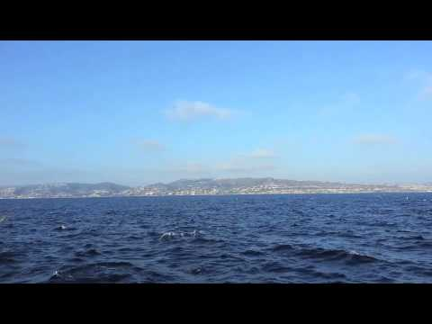 Dolphin Bliss Super Pod off Dana Point - CA