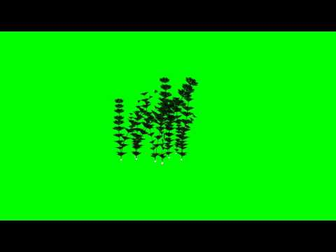 "water plants (animated) - ""free Chroma Key Effects"""