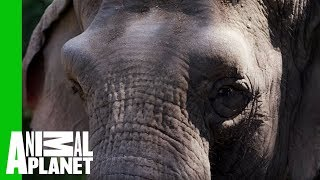 Fighting the Ivory Trade - ANIMALPLANETTV