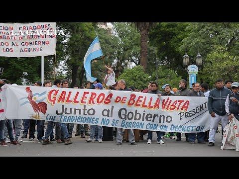 Galleros marcharon contra la cautelar que prohíbe las riñas