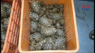 Star Tortoises Smugglers Arrested in Kanigiri | Prakasam Dist | CVR News - CVRNEWSOFFICIAL
