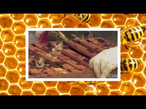 EDDIE   KEEPER OF BEES A SHORT DOCUMENTARY