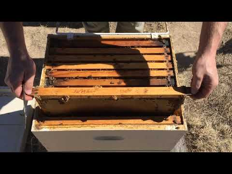 Hive Inspection Part 2:  How to Find the Queen (Systematically)!