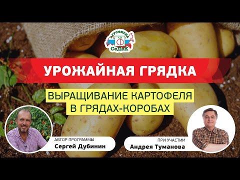 yutub-virashivanie-kartofelya