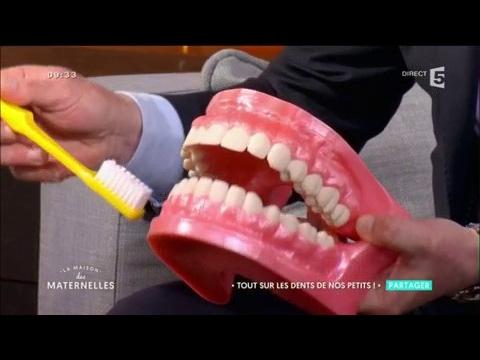 Tout savoir sur les dents des enfants - La Maison des maternelles
