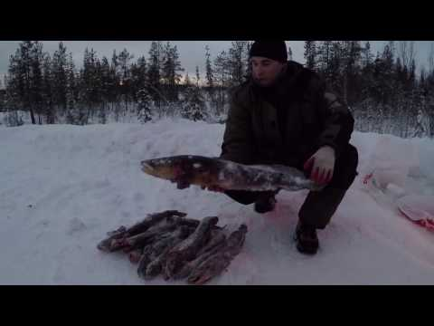 видео рыбалка на налима на неве