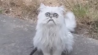 Weird-looking cat Wilfred goes viral with Michael Rapaport voiceover - THESUNNEWSPAPER