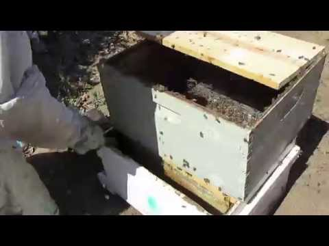 Finding a queen bee using the filter method