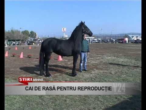 cai de rasa pentru reproductie .avi