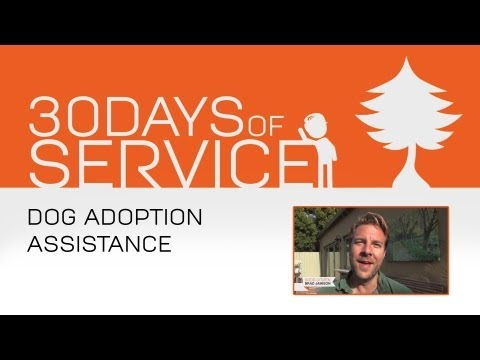 30 Days of Service by Brad Jamison: Dog Adoption Assistance