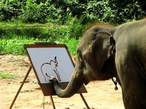 Слоны рисуют разоблачение