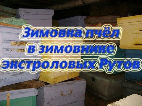 Осмотр пчелосемей зимующих в зимовнике в Рутовских экстроловых ульях Карники и Карпатки. Beekeeping.