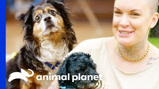 Mr. Rags & Mcgee Find Their Forever Homes | Amanda To The Rescue - ANIMALPLANETTV