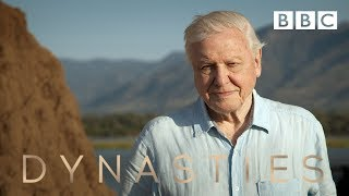 Sir David Attenborough on his new series, Dynasties - BBC - BBC