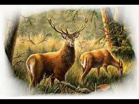 Poľovnícke signály Lovu Zdar