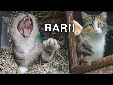 CATS! How Adopting Barn Cats Is Working for Us