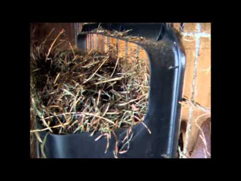 A homemade goat feeder with MINIMAL HAY WASTE!  Nov 2013