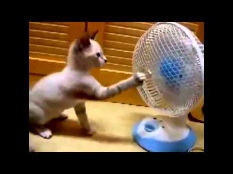 مقاطع مضحكة للقطط - عرب توداي