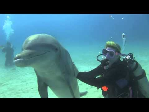 Tori & Levi's Dolphin Dive at UNEXSO