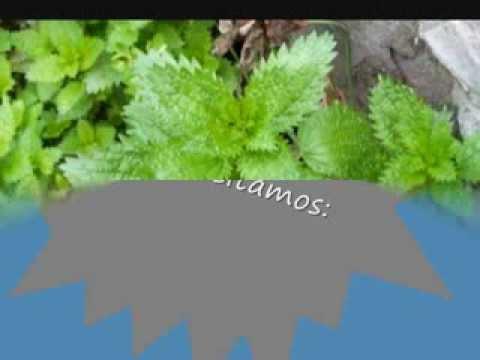 Abono e insecticida caseros -Purín de ortigas-