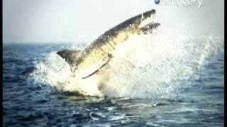 Shark Attack - Ride of the Valkyries