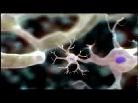 Introduction to Cells -gFuEo2ccTPA