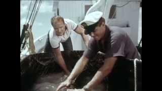 46 Flippers abenteuerliche Reise, Teil 1