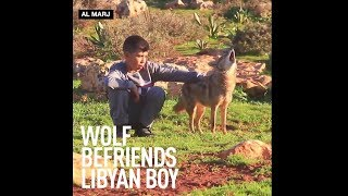 Libyan boy befriends African Golden Wolf & teaches it to herd sheep - RUSSIATODAY