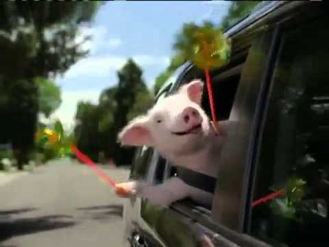 geico insurance commercial piggy