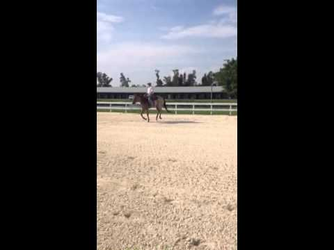 Goody - Beautiful Roan QH Gelding Video #4