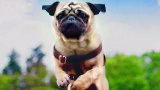 PATRICK Trailer (2018) Kids & Family, Dog Movie - FILMSACTUTRAILERS