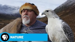 Wild Way of the Vikings Preview | NATURE | PBS - PBS