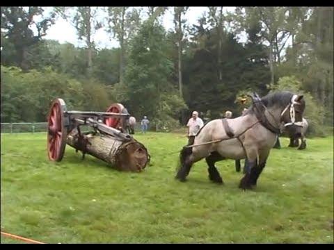Petra : the strongest Belgian Draft Horse