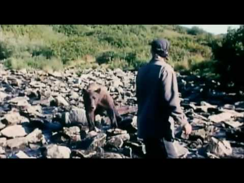 Grizzly Man 2005 documentary movie, default video feature image, click play to watch stream online