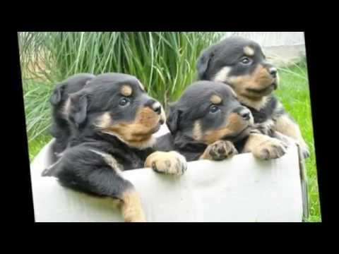 10 najsladjih pasa