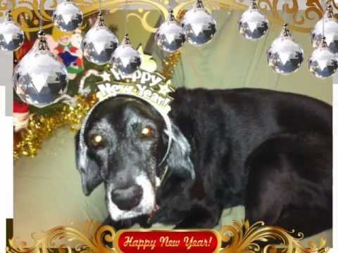 Happy New Year from Kate