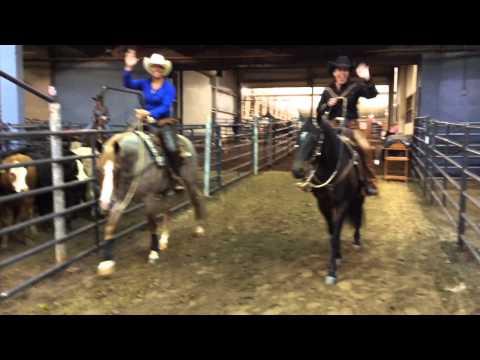 2015 Zoetis AQHA Cattle Level 1 Championship Show April 17