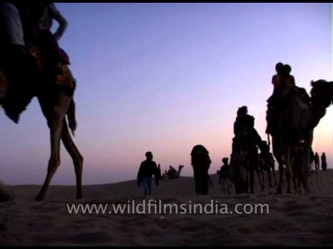 Camel safari in Jaisalmer amid sand dunes in Thar desert