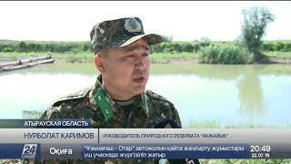Рыбачить разрешили на территории природного резервата «Акжайык»