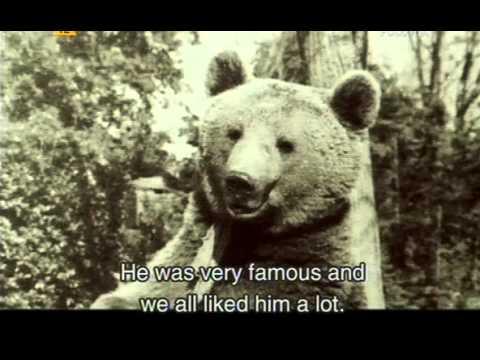 Piwko dla niedźwiedzia / Beer for a Bear   PL/ENG