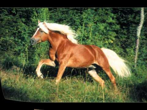 Raças De Cavalo