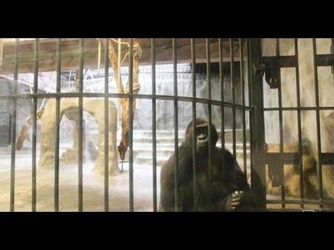 Promo รักโลก ตอน ถึงเวลาปิดตำนานสวนสัตว์ลอยฟ้า