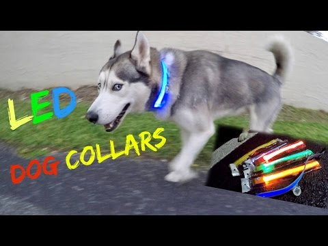 Awesome LED Dog Collar! (Review)