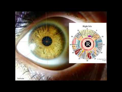 A Number of Iridology Overviews using Bernard Jensen - Dr Morse Approach