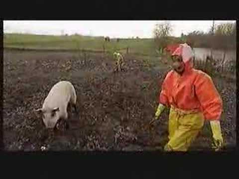 Rainwear pigs in the mud