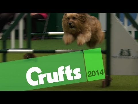 Agility | Best of Rescue Dogs | Crufts 2014